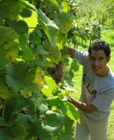 Viticulture program