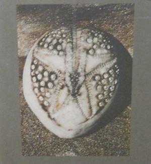 Marine life donation shell1