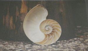 Marine life donation shell2